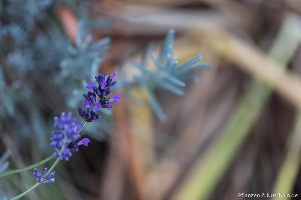 Letzte Blüten