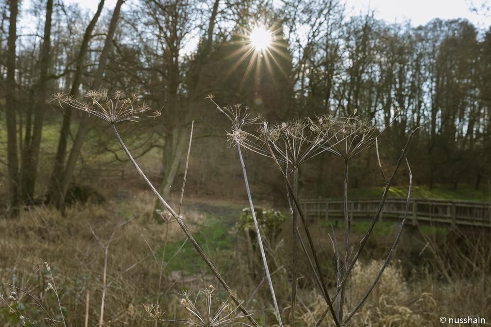 Sonnenstrahlen an einem Wintertag